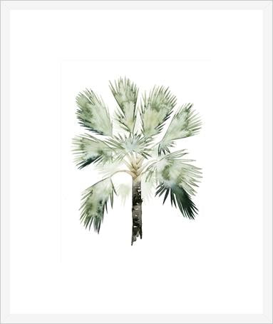 Watercolor Palm Of The Tropics Ii