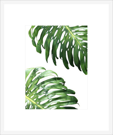 Double Philodendron