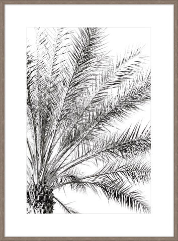 Palm Breeze Noir