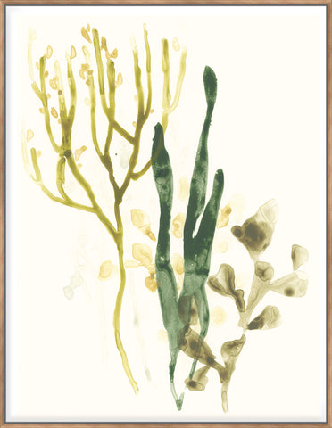 Kelp Collection V  - Canvas