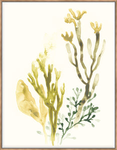 Kelp Collection II - Canvas
