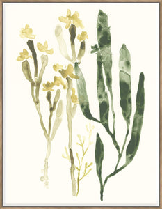 Kelp Collection Iv