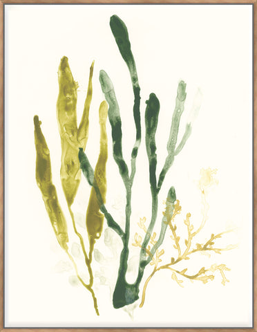 Kelp Collection I - Canvas