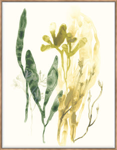 Kelp Collection VI - Canvas