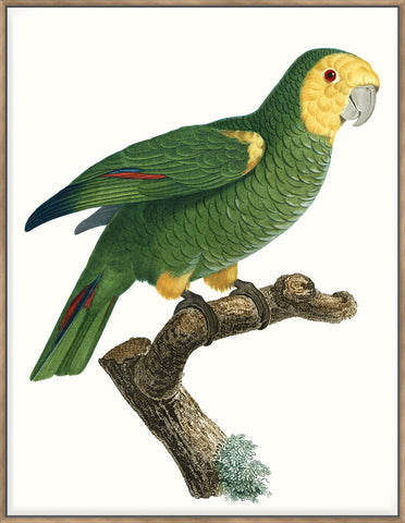 Parrot Of The Tropics Iv 123X93Cm / Natural
