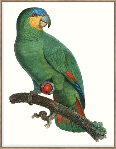 Parrot Of The Tropics I 123X93Cm / Natural