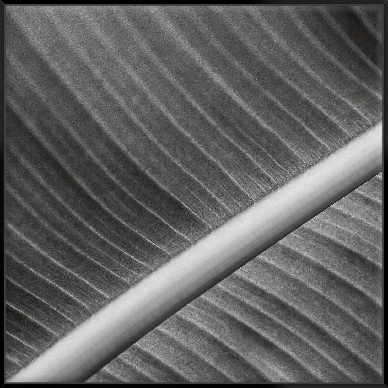 Palm Leaves I 103X103Cm / Black