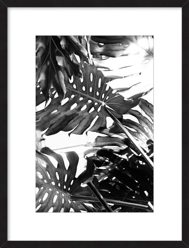 Tropicial Leaves II
