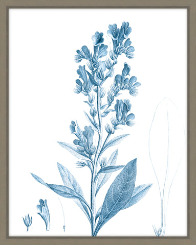 Antique Botanical In Blue III