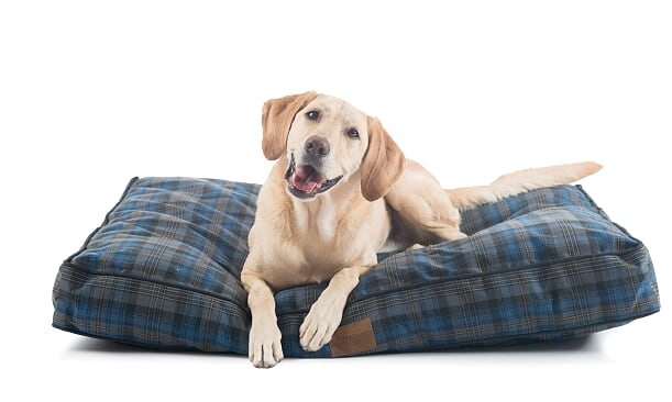 Pendleton Crescent Lake Plaid Napper Designer Dog Bed