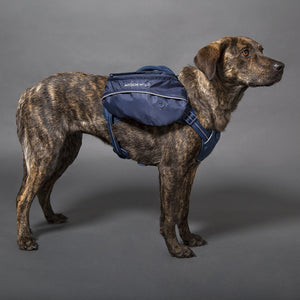 Pac Heights Dog Harness