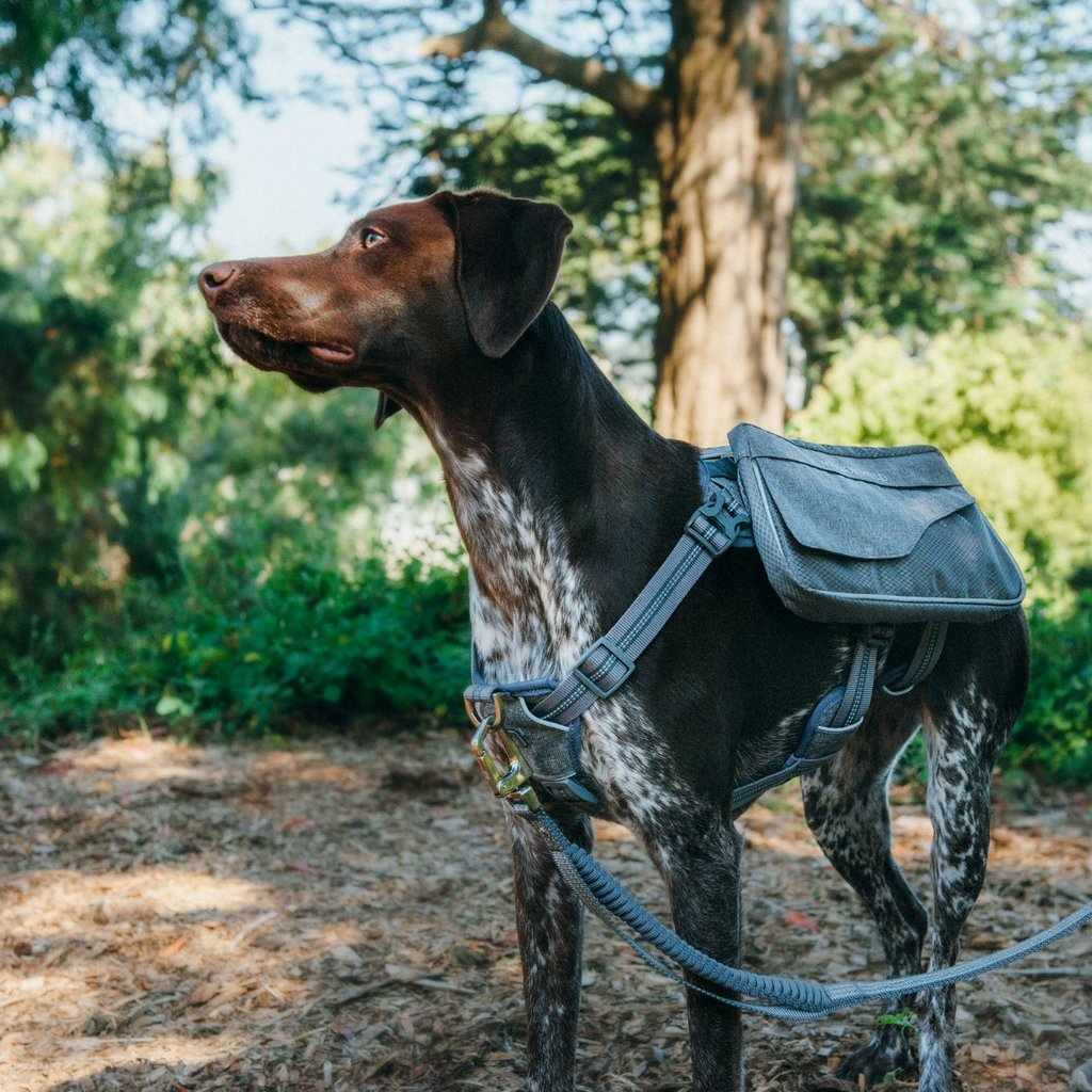 Richmond Day Pack Dog Harness