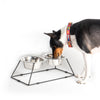 M-Series Luxury Feeder Double Stand & Pet Bowls