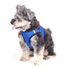 Blue Sidekick Harness
