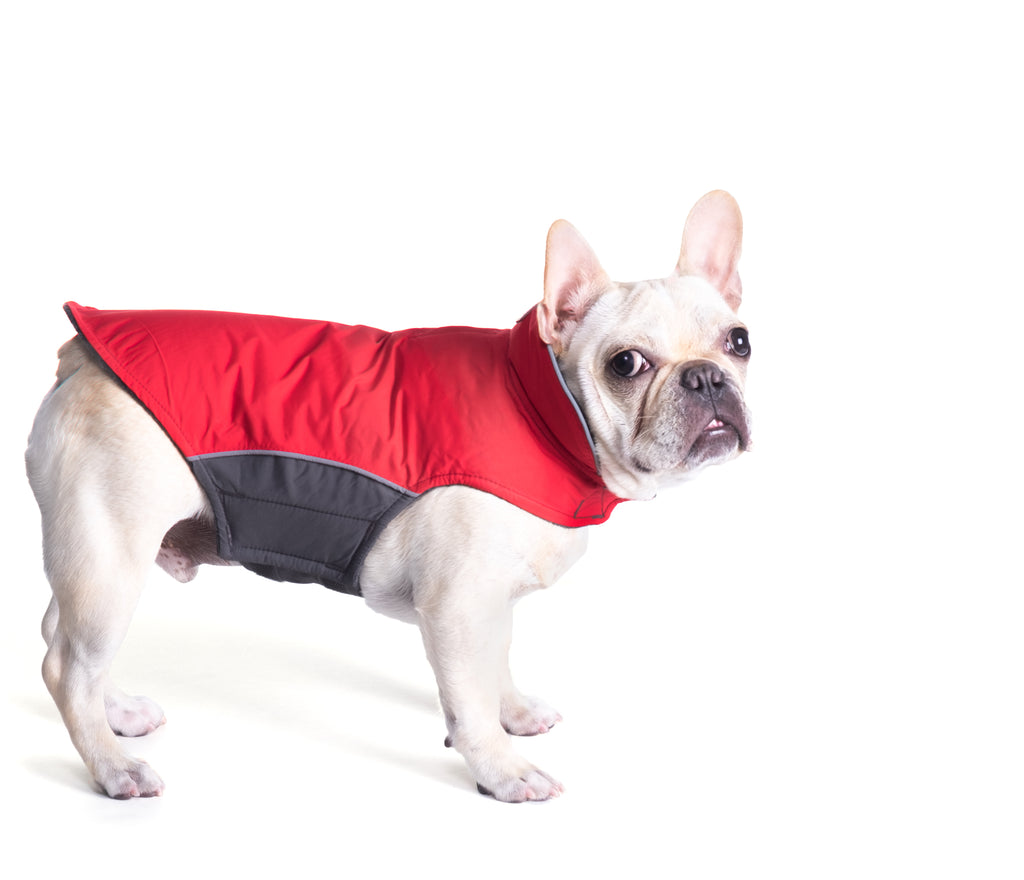 Red Apex Active All-Weather Water-Resistant Nylon Warm Designer Dog Coat Jacket
