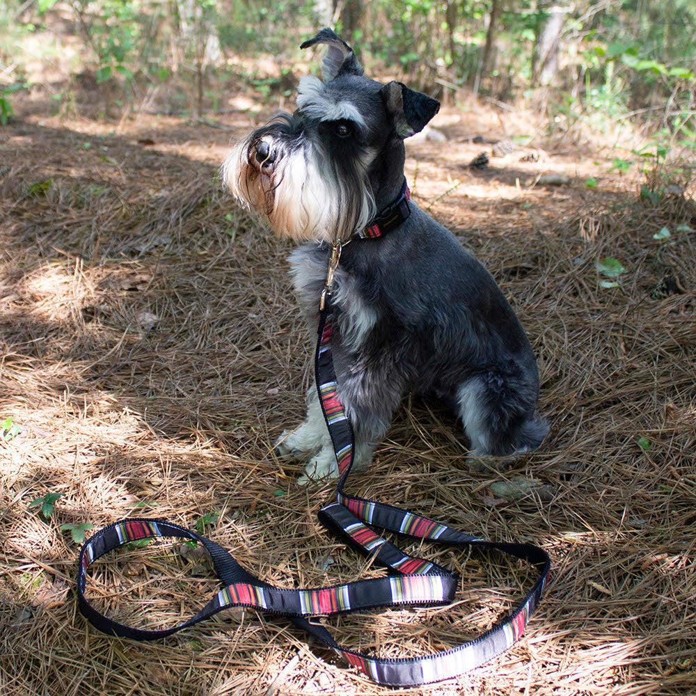 Acadia National Park Pendleton Designer Luxury Grosgrain Ribbon Nylon Webbing Dog Collar & Leash Set