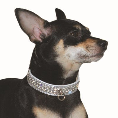 Celebrity Silver Rhinestone Studded Cat / Dog Collar