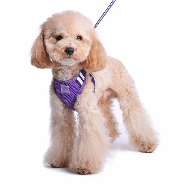 EasyGo Basic Purple Dog / Cat Harness