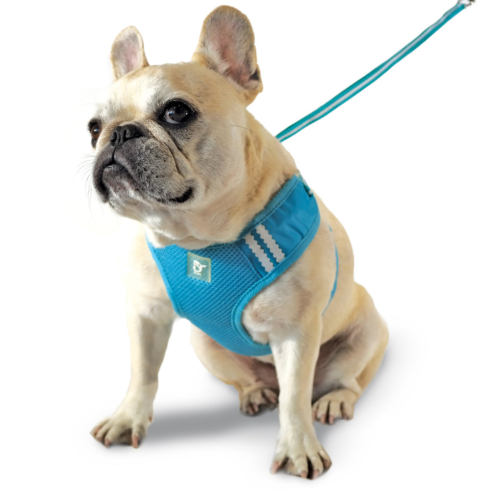 EasyGo Basic Blue Dog / Cat Harness