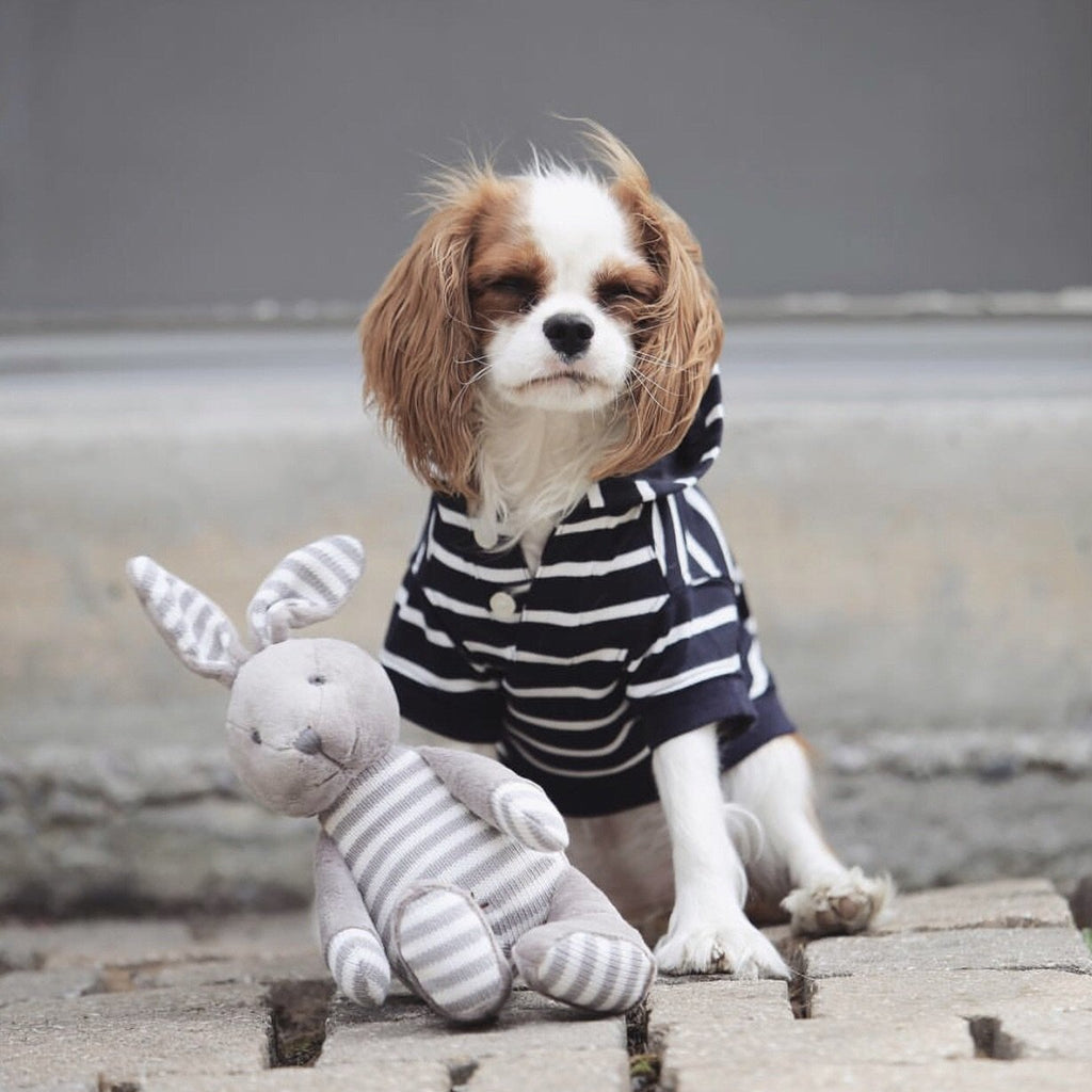 Zebra Stripes Barkholic Hoodie Organic Cotton Modern Dog Shirt