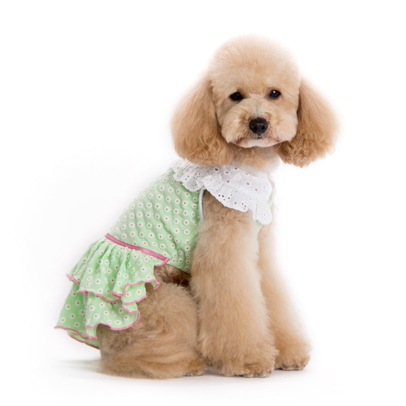 Little Flower Pastel Green Designer Dog Dress