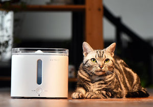 PetKit ® 'Eversweet'  Smart Pet Drinking Water Fountain Filtration System