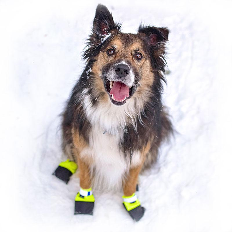 Wilderdog All-Weather Outdoor Protection Sled Dog Racer Paw Shoe Booties