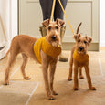 Mustard Wax Dog Harness - Mutts & Hounds