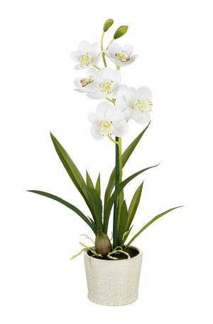 Parlane-Potted Orchid Cymbidium White | Eve & Ranshaw