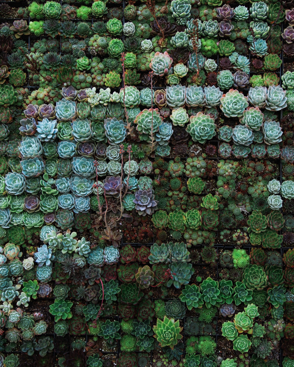 4 REASONS WHY YOUR SUCCULENTS ARE DYING