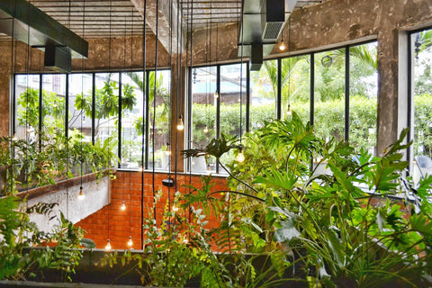 Plantr planters Cape Town South Africa Office Plants indoor plants houseplants sustainable architecture