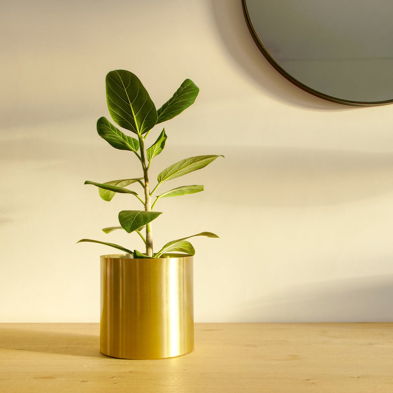 Plantr | luxury planters | Steel design | Contemporary plants & pots | Cape Town  Edit alt text Minilux Gold Aurous