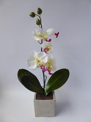 40cm White and Pink Stone Potted Orchid