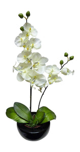 46cm Cream Orchid in Round Black Pot