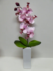Pink Orchid In Tall White Square Vase