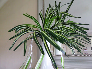Artificial Plants 65cm Large Spider Plant Foliage - Variegated Hanging Trailing