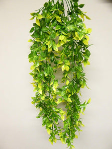 Artificial Plants - 65cm Large Yellow and Green Ruscus Plant Foliage - Hanging Trailing