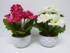 Artificial Potted Plants 30cm Gerbera's in a White Dimple Pot - 2 Colours