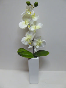 White Orchid in Tall White Vase
