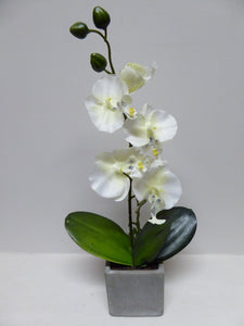 40cm White Orchid in Stone Pot