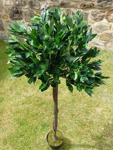 1.2m Buxus Bay Tree 741 Leaves