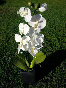 55cm White Orchid in Tall Black Square Pot