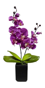 55cm Pink Orchid in Tall Black Square Pot