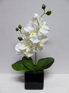 34cm White Orchid in Black Pot