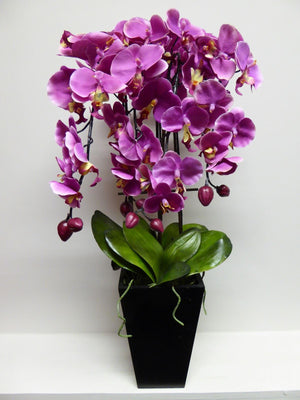 Large Pink Orchid in Black Pot