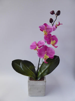 PINK Stone Potted Orchid 2 Cols Ass
