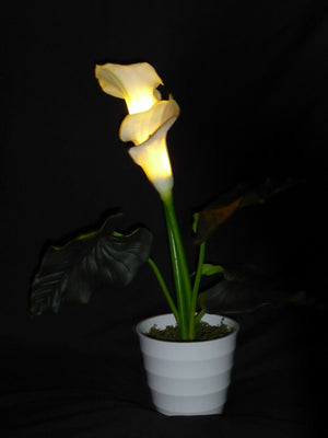 Pre-Lit Calla Lily Plant in a Pot with Cream Flowers