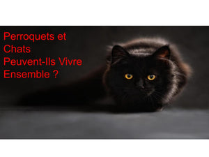 Cohabitation entre Perroquet et Chat