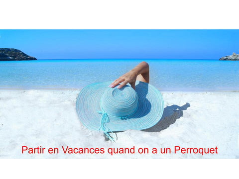 Partir en Vacances quand on a un Perroquet