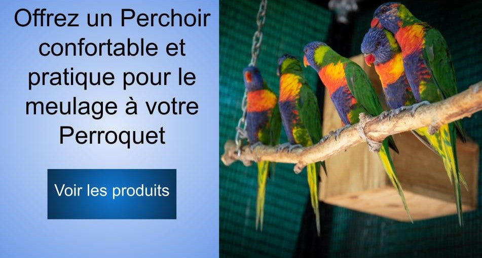 Perchoir perroquet